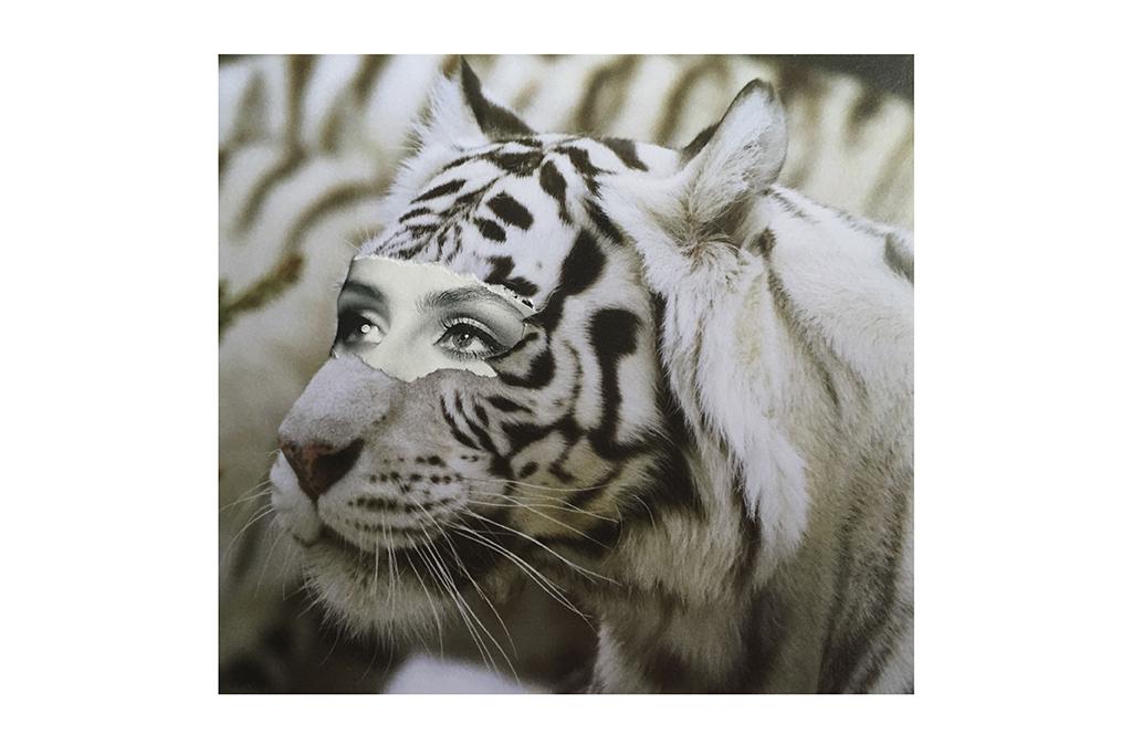 Los días contados - Tigre